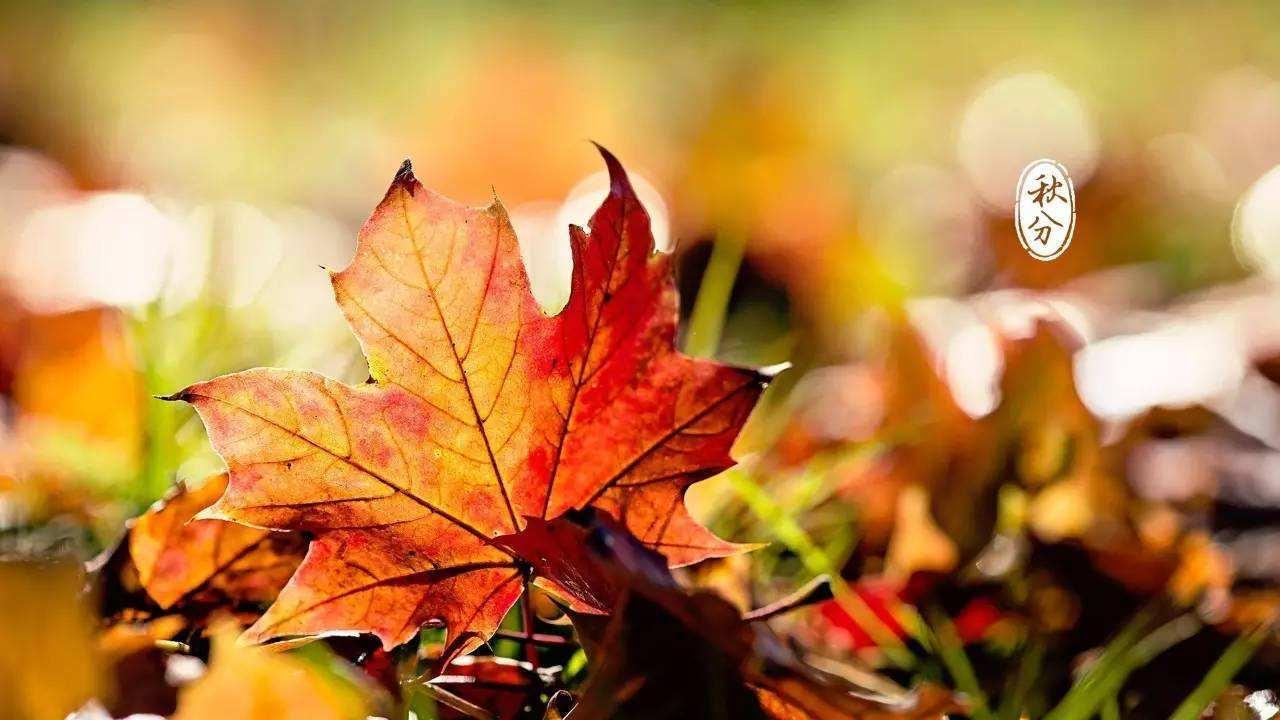 秋分来了本应由热转凉 四川却难以进入秋天